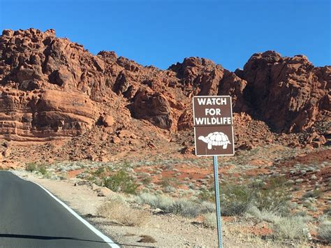 warning - turtles on the road - Valley of Fire State Park