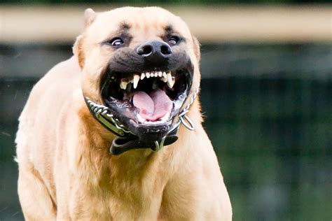 Woman hospitalized after 'horrific' attack by four pit bulls