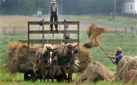 Asthma cure could be found in Amish barn dust