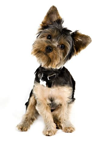 The Dog Trainer : 4 (Other) Best Things to Do for Your Dog