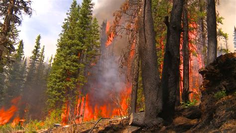 Forest Fire Stock Footage Video (100% Royalty-free