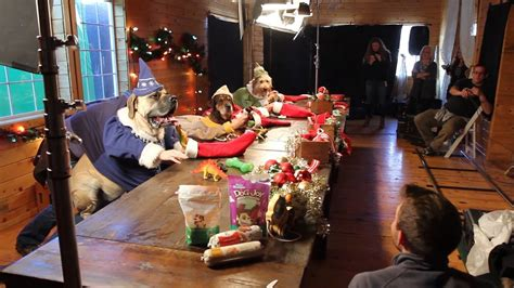 Santa's Elves - Dogs and Cats with Human Hands Making Toys
