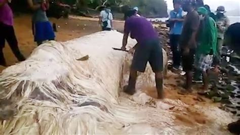 """Mysterious """"Hairy Blob"""" Washed Up on Philippines Beach"""